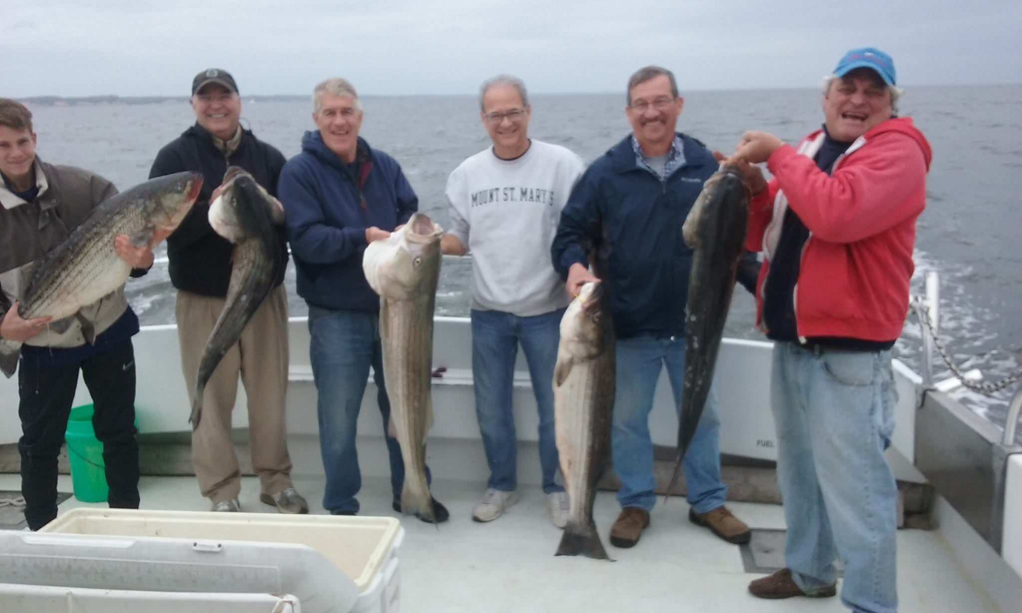 Whopping Catch Of Chesapeake Bay Rockfish!