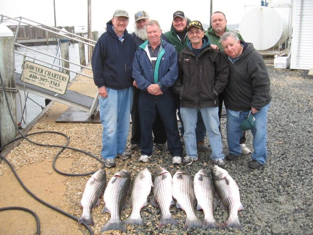 Full Limit Of Trophy Rockfish On The Chesapeake Bay!